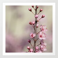 cherry blossom Art Prints featuring Cherry Blossom by Zen and Chic
