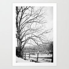 Bare winter Art Print