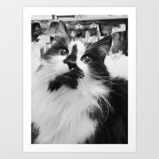 Blott - Kitty Cat I Art Print