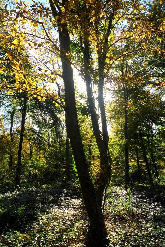 Glowing Woods. Art Print