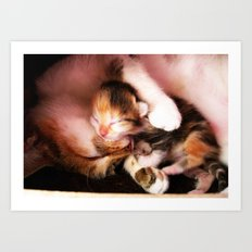 Cats hug Art Print