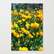 Golden State Canvas Print