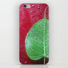 Leaf on red iPhone & iPod Skin