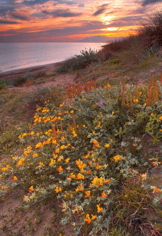 Yellow flowers at the sea Art Print