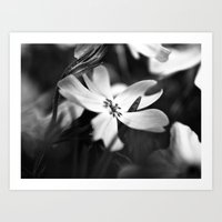 Petals - Black and White Floral Photo Art Print