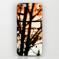 Late Autumn Chill iPhone & iPod Skin
