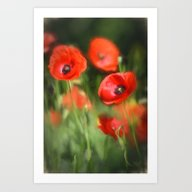 Warmth- Poppies In Love  Art Print