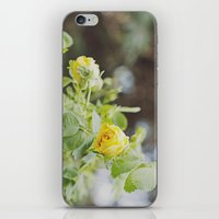 Rosa Amarilla iPhone & iPod Skin