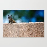 Chipper Canvas Print
