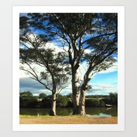 White Gum Trees Art Print