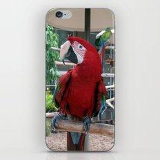 Macaw I iPhone & iPod Skin