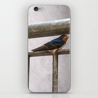 One Swallow Doesn't Make… iPhone & iPod Skin