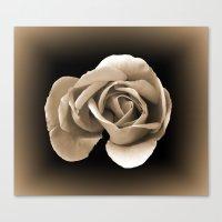 Rose In Sepia Canvas Print