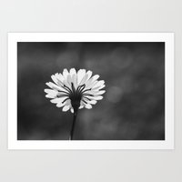 Nature In Monochrome Art Print