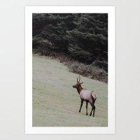 Elk on the Road Art Print