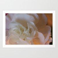 Translucent Carnation  Art Print