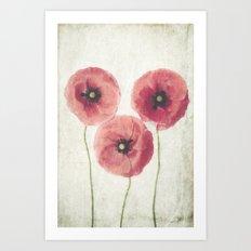 Vintage Poppies  Art Print