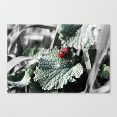 Lady Bugs Caught In Action Canvas Print
