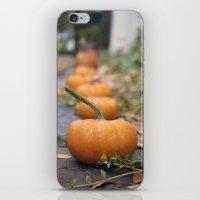 Pumkin Row iPhone & iPod Skin