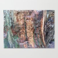 Tree Bark In The Abstrac… Canvas Print