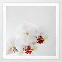 :: Orchidea :: Art Print