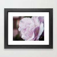The Lilac Rose Framed Art Print