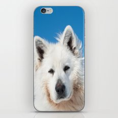 White Husky 2 iPhone & iPod Skin