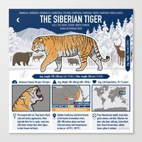 The Wild Ones: Siberian Tiger (info) Canvas Print