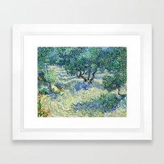 Vincent Van Gogh - Olive… Framed Art Print