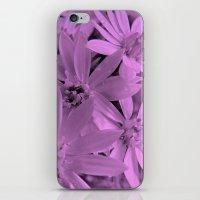 Pink Daisies iPhone & iPod Skin