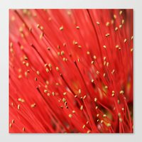 Red  &  Hairy Canvas Print