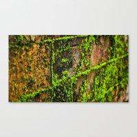 Moss Wall Canvas Print