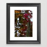 Japanese Maple Tree Framed Art Print