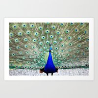 peacock Art Prints featuring Peacock by WhimsyRomance&Fun