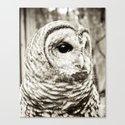Wise Old Owl Canvas Print