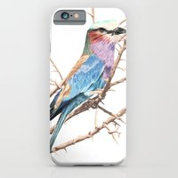 Lilac breasted roller iPhone 6 Slim Case