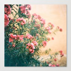 pink flowers in front of yellow wall Canvas Print