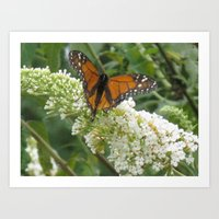 Monarch On Butterfly Bus… Art Print