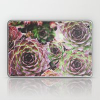 Hens and Chicks Laptop & iPad Skin