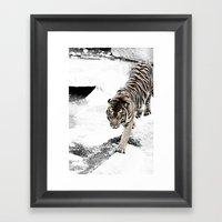 Eye Of The Tiger Framed Art Print