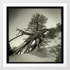 Tree at Tent Rocks Art Print
