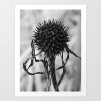 Dead Cone Flower 4 Art Print