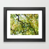 Arboretum Tree Framed Art Print