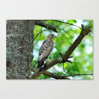 What's for lunch ? Canvas Print