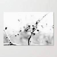 Winter White Canvas Print