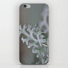 Silver Brocade iPhone & iPod Skin