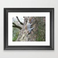 Squirrel Gymnastics Framed Art Print