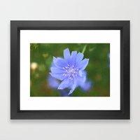 cornflower blue Framed Art Print