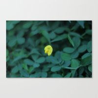 Yellow On Green Canvas Print