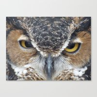 Owl V Canvas Print